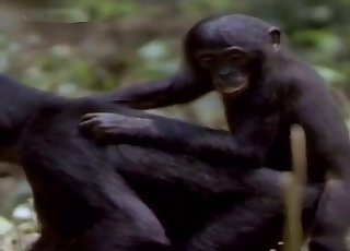 Passionate monkey fucking outdoors