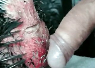 Brutal beast fucked her hole from behind